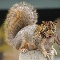 Artist's impression of the Sringeri carnivorous squirrel (credit: network54.com)