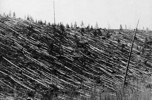 Trees knocked down and burned over hundreds of square km by the 1908Tunguska Event (credit: Leonid Alekseyevich Kulik deceased)