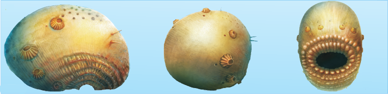 Reconstruction of Saccorhytus coronarius from the lowest Cambrian of Shaanxi, China. (credit: Han et al 1917)